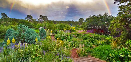 Our Garden at Forest Edge Gardens