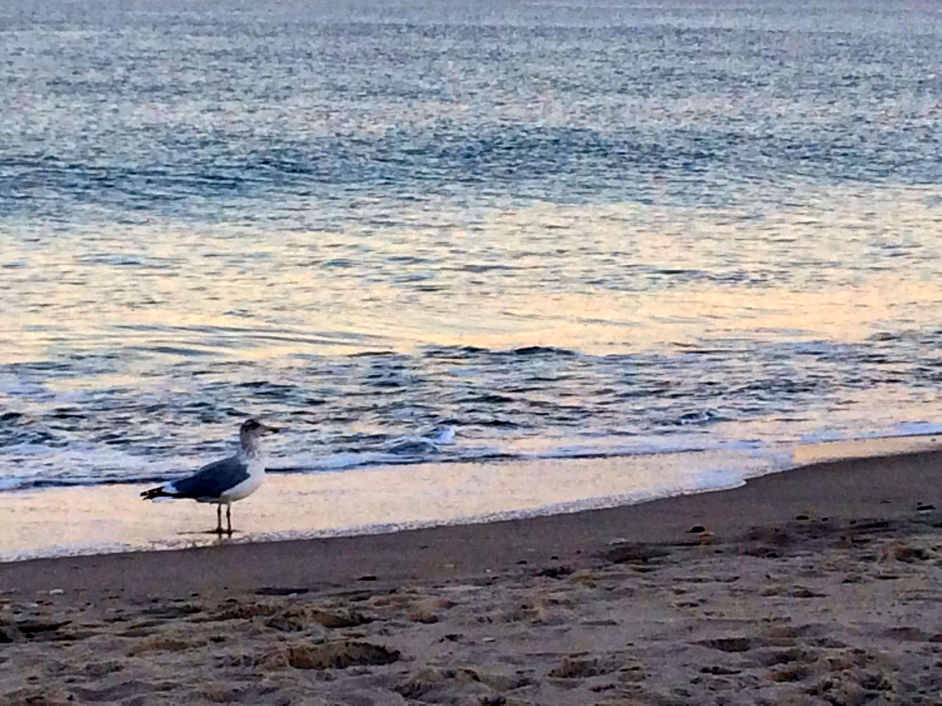 Promenade Beach Long Branch