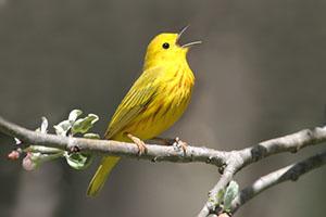 Bird in JoCo KS