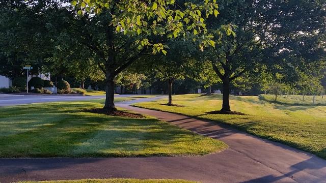 Trees, green grass, and sidewalk within The Knolls of Birmingham community.