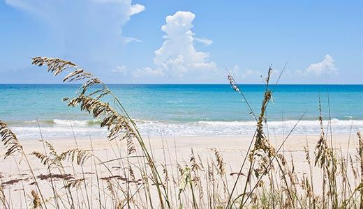 Light blue ocean and white sand beach with tall grasses swaying in the wind