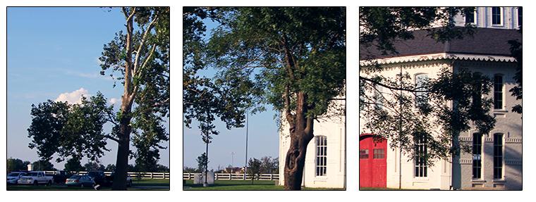 Lexington KY Area Photo with border