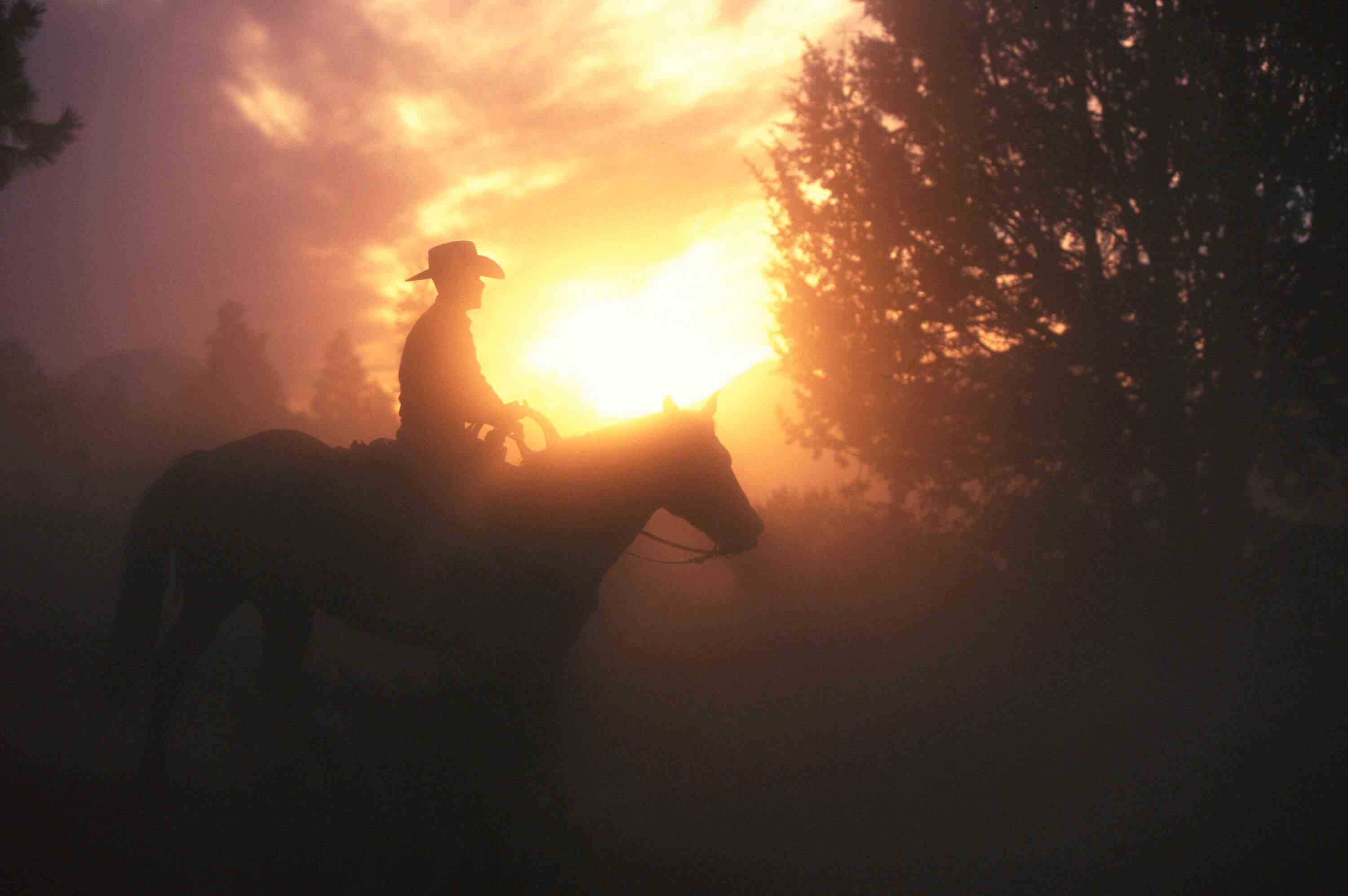Silhouette of cowboy on horse with tree and dusty sun in the background