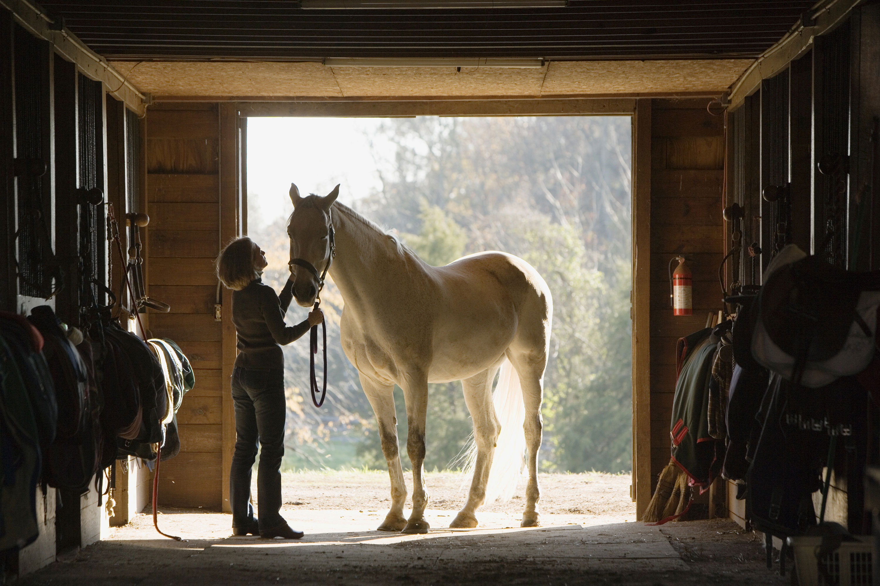 Woman with white horse in doorway of tack shed