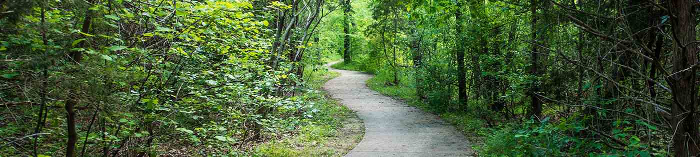 Paved path in forest