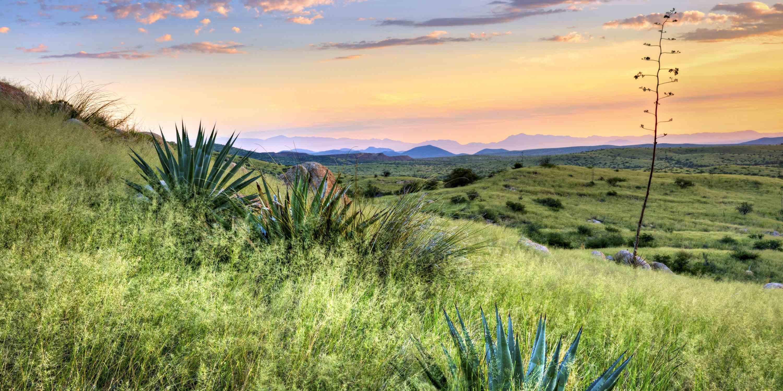 Southern Arizona Plains