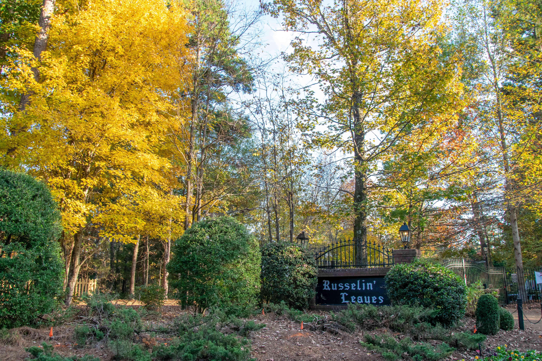 Russelin Leaves2.jpg