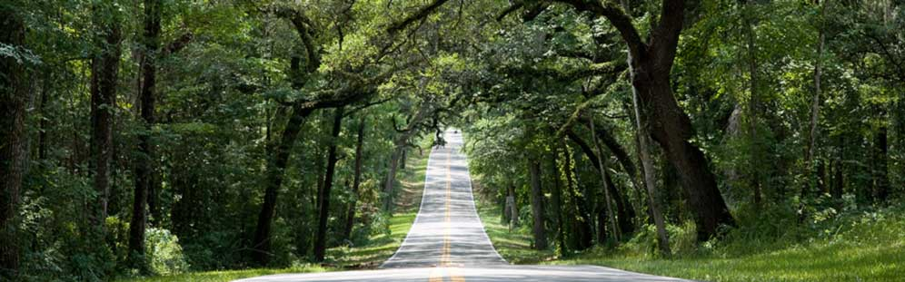 Long road with trees on each side in Pasco County, Florida