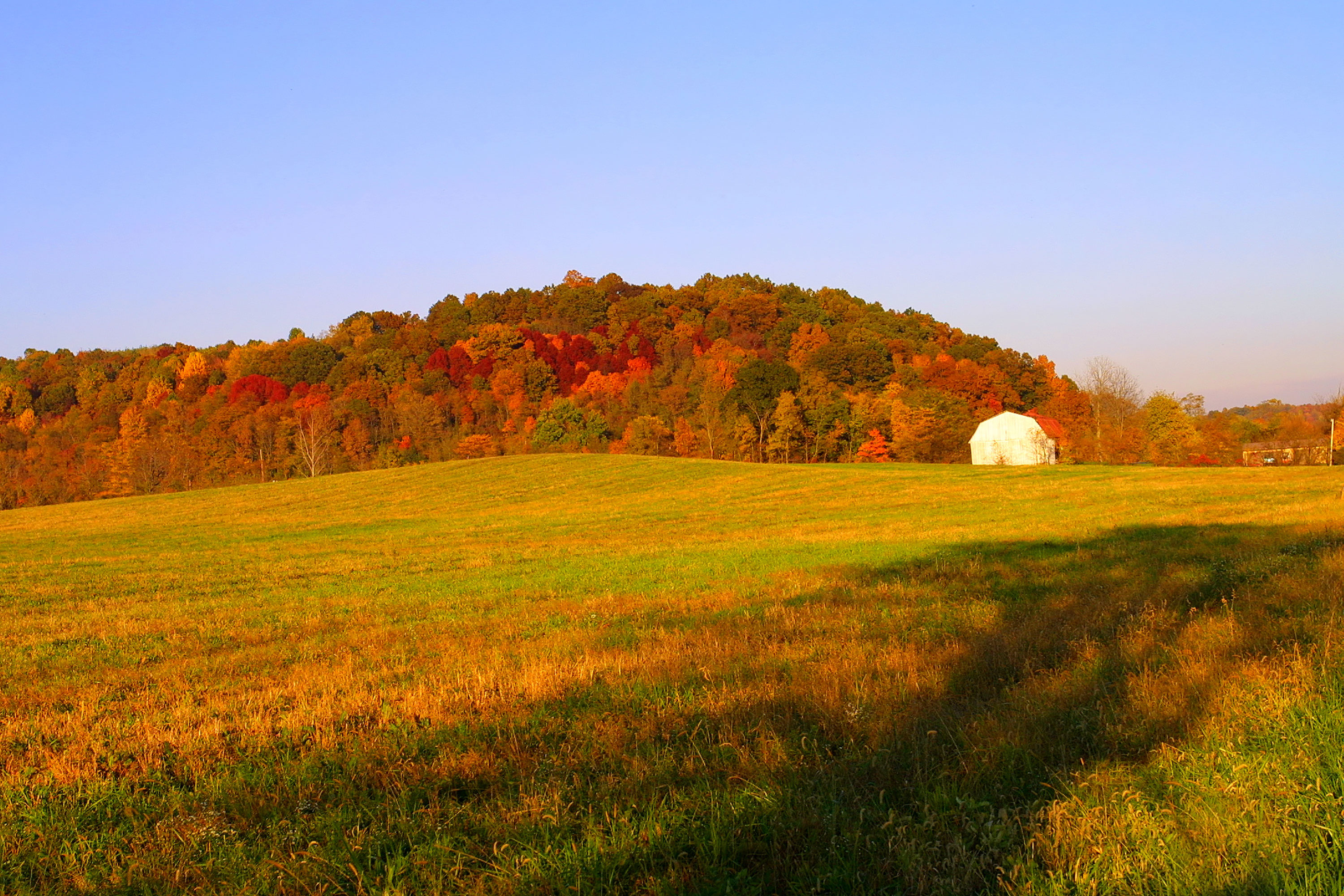 Multi color trees and grass with barn in distance