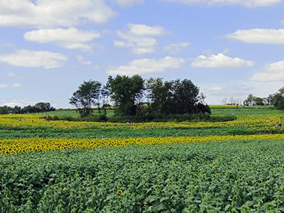 a prairie in Kansas
