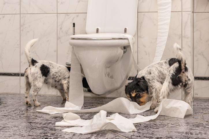 Two puppies shredding toilet paper next to a toilet