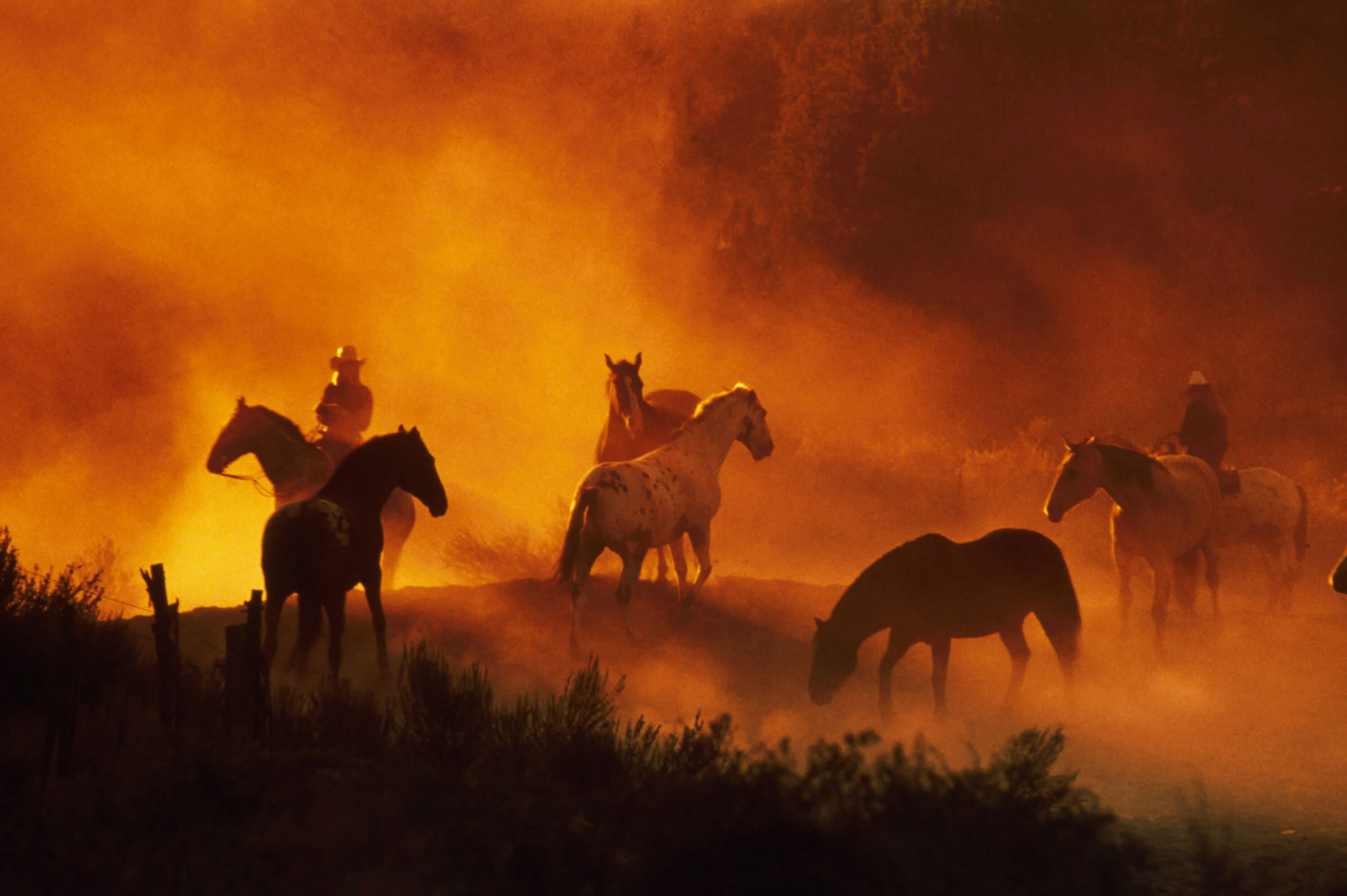 Cowboys and horses on a dusty orange trail