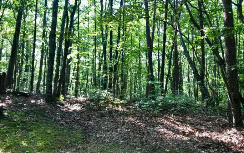 42 AC BURNT MOUNTAIN LANE, Ellijay, GA 30540