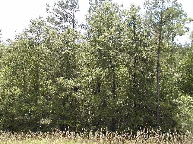 Morninglory Rd, Leakesville, MS 39451