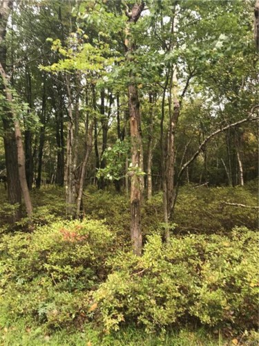 Forest Hill Drive, Tunkhannock Township, PA 18610