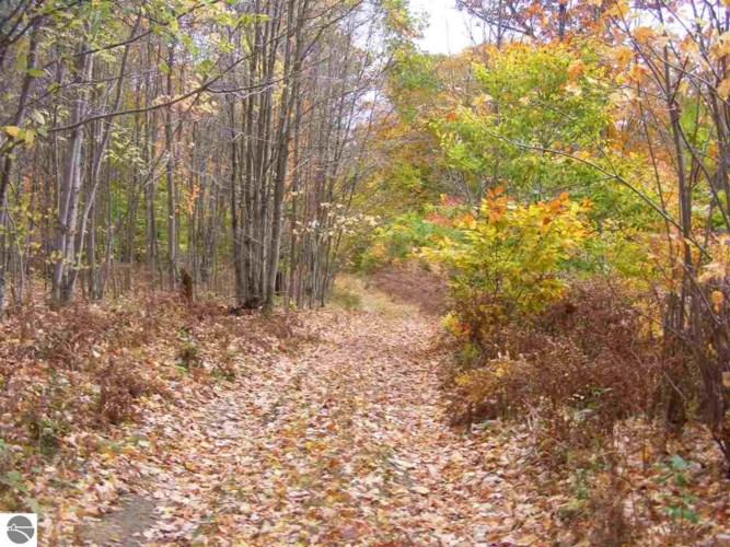 0 Trail Road, Cadillac, MI 49601