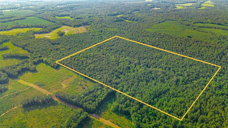 40 Acres Timber Road 23, Chester, TX 75936