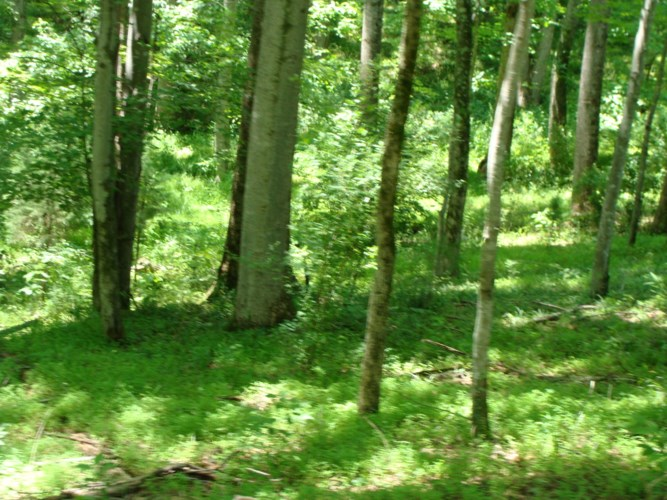 LOT 7  MOUNTAIN COVE DR, Hardy, VA 24101