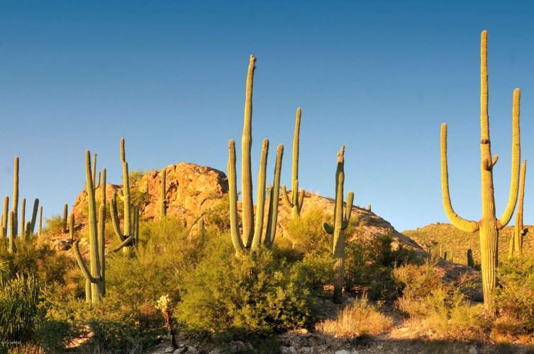6412 N Desert Wind Circle #46, Tucson, AZ 85750