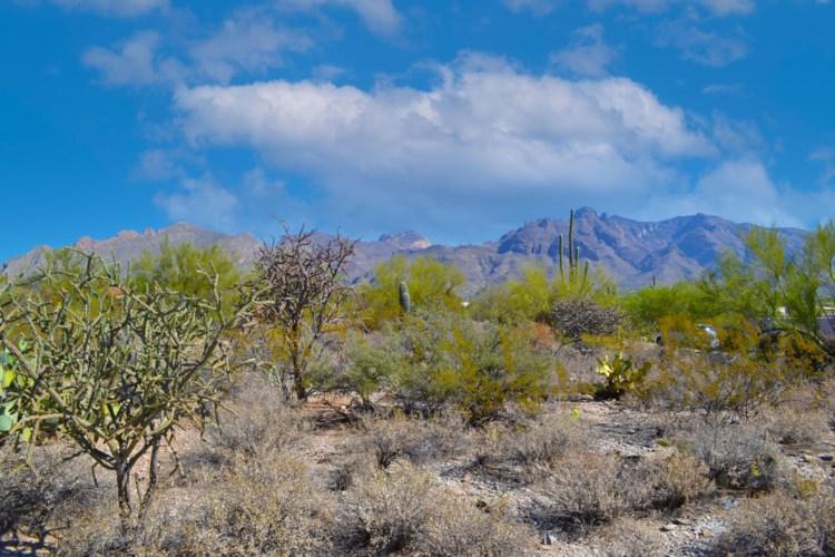 1231 E Placita De Graciela #517, Tucson, AZ 85718