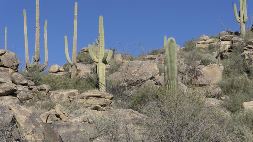 14442 N Phinny Rock Place #46, Tucson, AZ 85755
