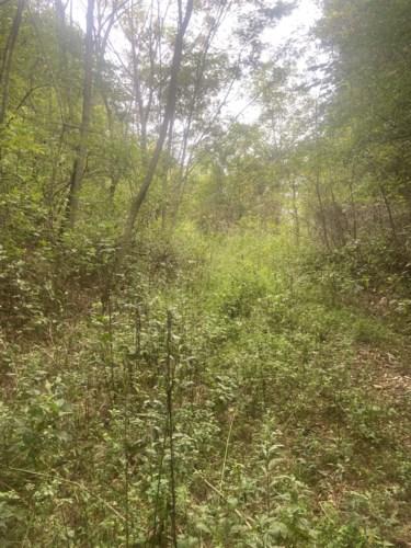 1615 Hurricane Creek Rd, Lynchburg, TN 37352