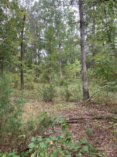 231 Kindle Rd, Decaturville, TN 38329