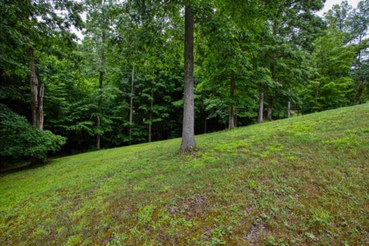 168 Horse shoe Dr, Wellington, KY 40387