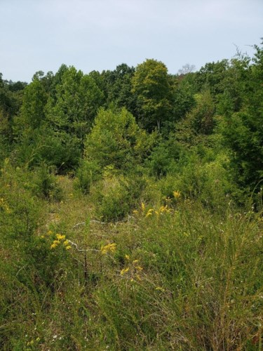 Lot 28 Brittany Drive, Monticello, KY 42633