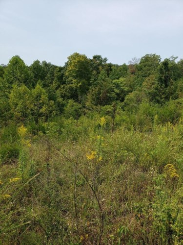 Lot 32 Brittany Drive, Monticello, KY 42633