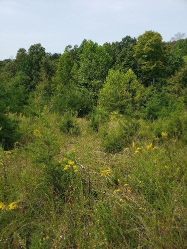 Lot 29 Brittany Drive, Monticello, KY 42633