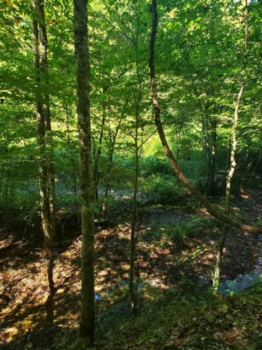 9999 Disappointment Hollow Road, Woolum, KY 40999