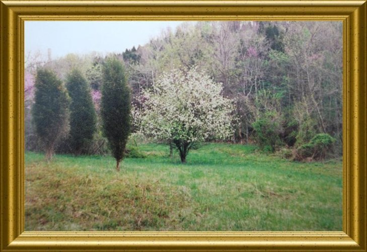 274 acres Hwy 57, Concord, KY 41056