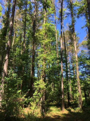 BRISTER RD, West, MS 39192