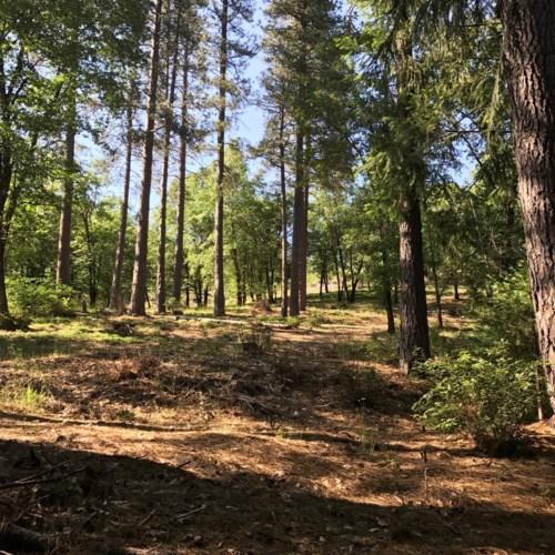 0 Ridgeway, Pollock Pines, CA 95726