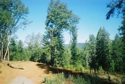 5130 Woodhaven Drive, Grizzly Flats, CA 95636