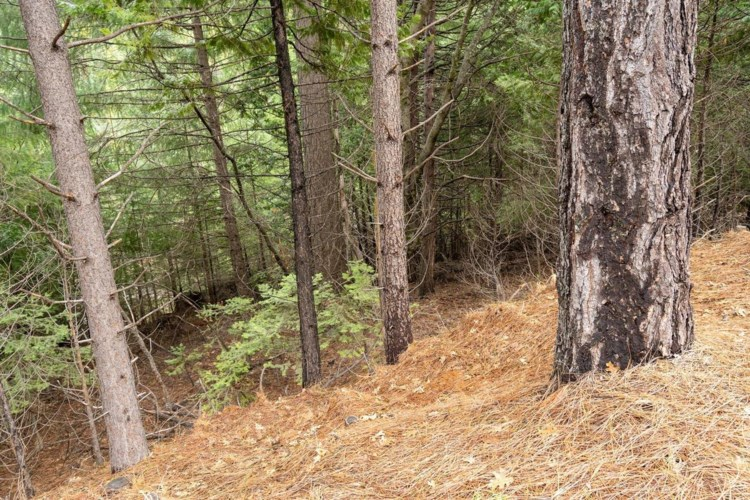 4754 Creekside Drive, Grizzly Flats, CA 95636