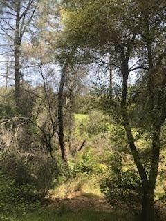 6165 starlight Lane, Mountain Ranch, CA 95246