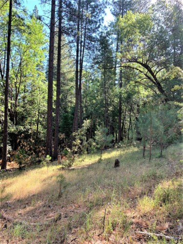 1324 Bald Mountain, West Point, CA 95255