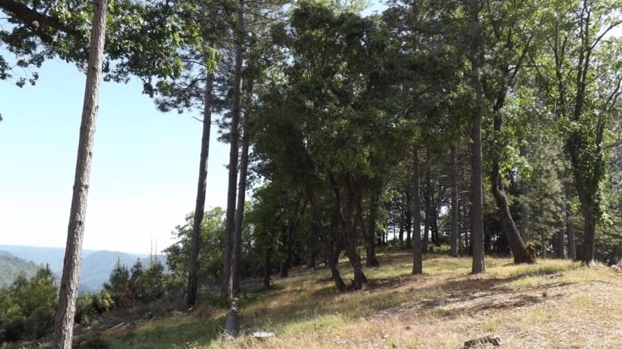 1551 Dusty Road, Colfax, CA 95713