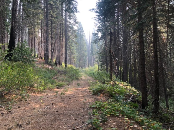 0 Foresthill/Soda Springs Road, Emigrant Gap, CA 95715