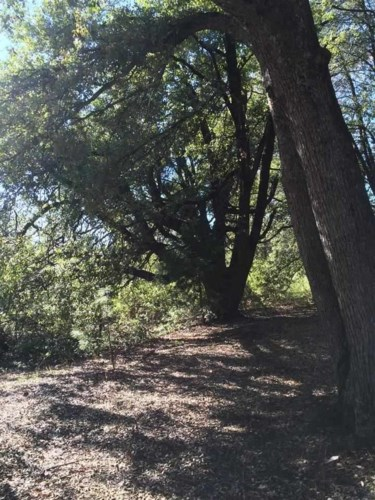 19435 Ridge Road, Pine Grove, CA 95665