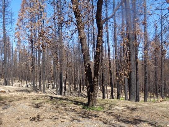 115 Silverado Trail, Berry Creek, CA 95916