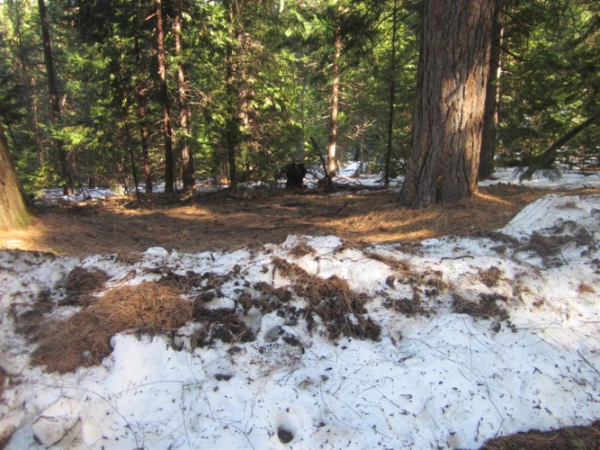 0 GRIZZLY FLAT Road, Grizzly Flats, CA 95636