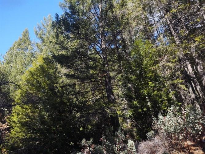 0 Tinsel Trail, Georgetown, CA 95634