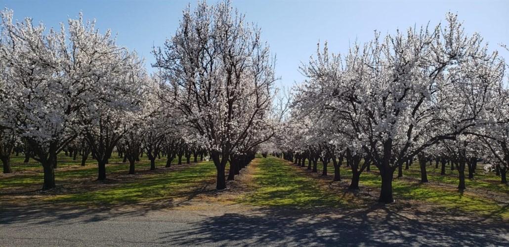0 Oak Way, Chico, CA 95973