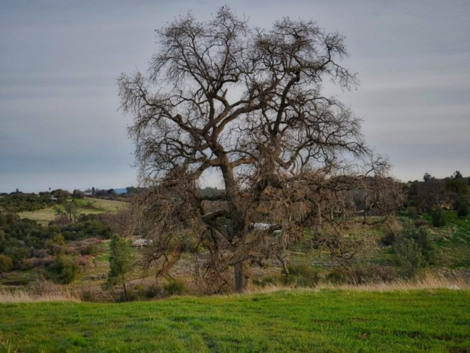 225 Blazeford Gulch, Oroville, CA 95966