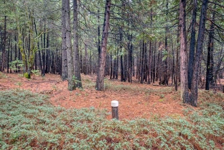 18642 Gold Creek Trail, Volcano, CA 95689