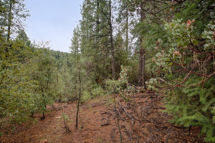 21670 Clute Canyon Road, Volcano, CA 95689