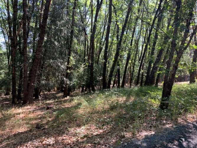 15367 Lakewood Lane, Grass Valley, CA 95945